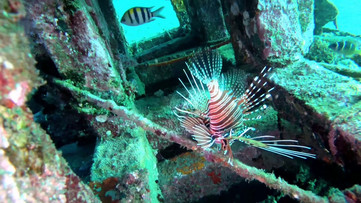 Bali, Amed: Jemeluk Bay marine wildlife filmed on breath hold