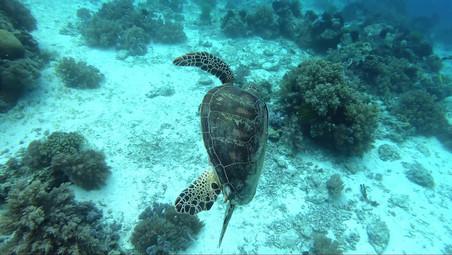 Panglao & Balicasag islands underwater wildlife exploration on breath hold