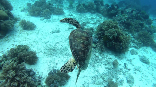 Panglao & Balicasag islands underwater wildlife exploration on breath hold