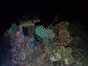 Snorkeling by Night