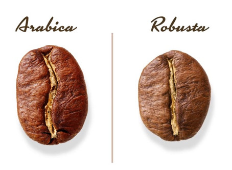 Arabica vs. Robusta: Know the Differences