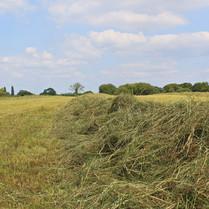 hay-lines_15033736436_o.jpg