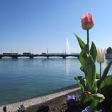 tulip_8716042362_o.jpg