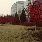 beautiful-colours-of-nature_28147618538_
