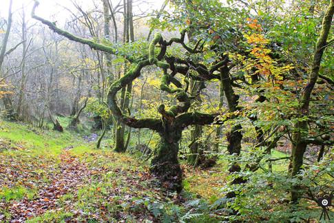 The Strange Tree