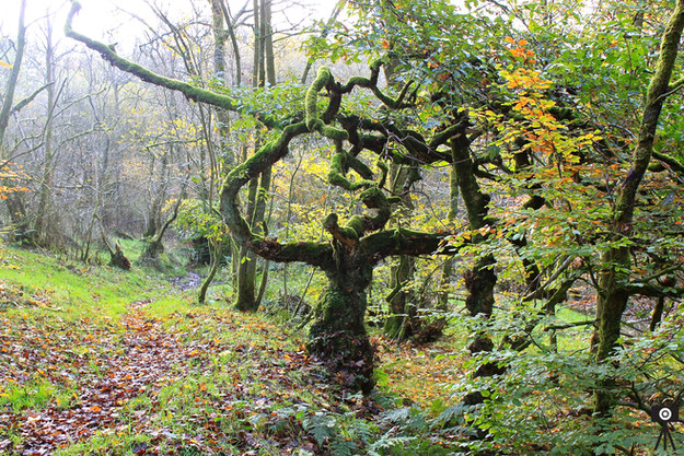 the-strange-tree_15886104932_o.jpg