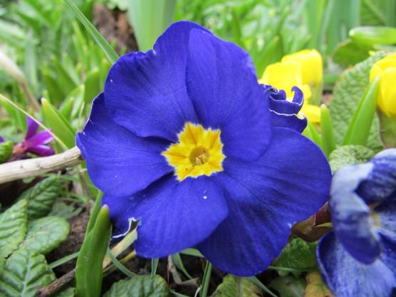 blue-flower_9079919816_o.jpg