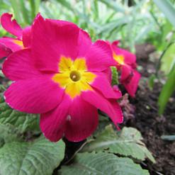 spring-flower_9160459765_o.jpg