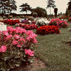 wonderful-bedding-flowers_21854724601_o.