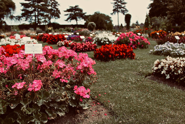Wonderful Bedding Flowers