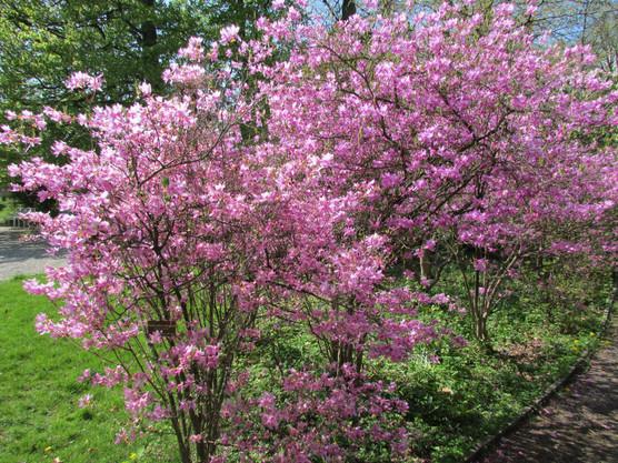 glorious-pink_8728982743_o.jpg