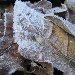early-winter-frost_12406559713_o.jpg