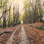 autumn-path_11029198473_o.jpg