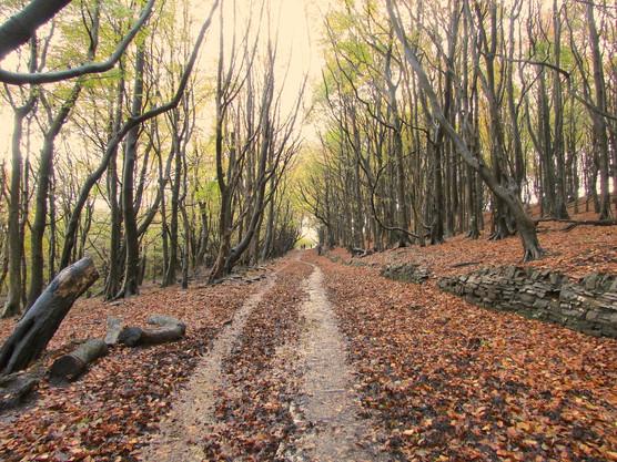 autumn-path_11029198473_o.jpg