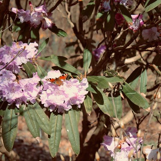 butterfly-in-the-sunlight_18938196558_o.
