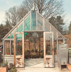 daffodil-greenhouse_18727013833_o.jpg
