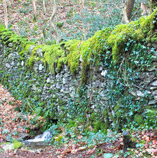 the-moss-covered-wall_16627699742_o.jpg