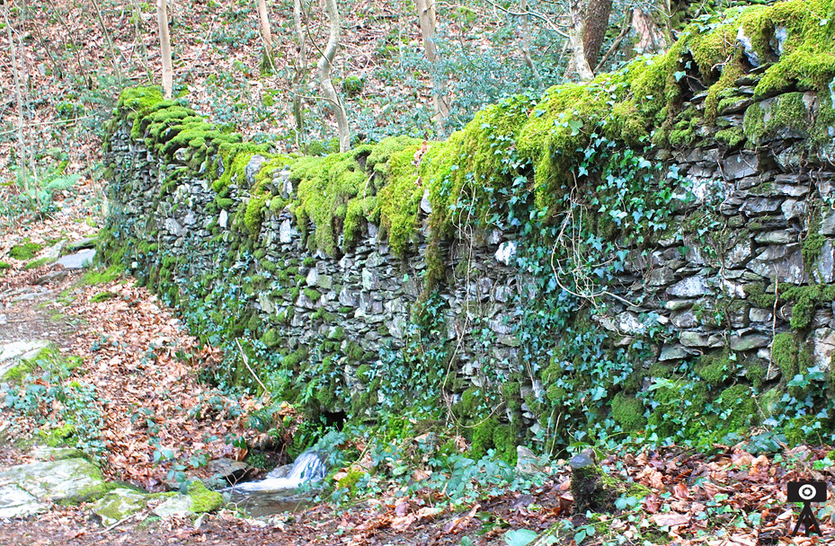 The Moss-Covered Wall