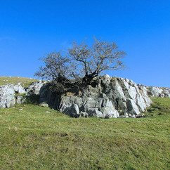 hillside-tree_12614968184_o.jpg
