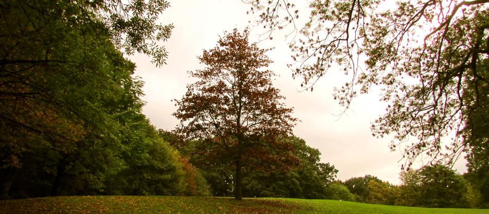 the-autumnal-scene_10906291503_o.jpg