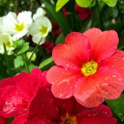 spring-complete_14038771295_o.jpg