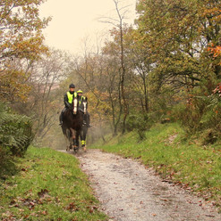 horses-approaching_10885538974_o.jpg