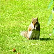 squirrel-in-a-summer-garden_9688322216_o