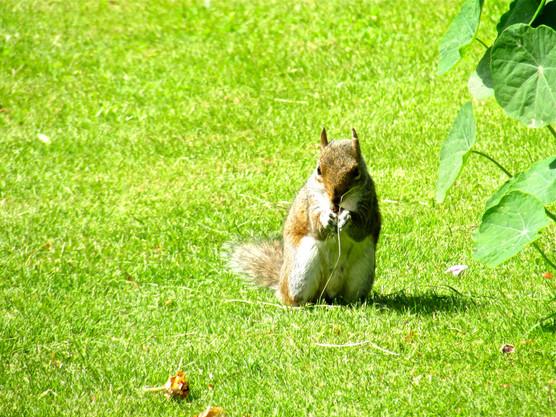 squirrel-in-a-summer-garden_9688322216_o.jpg