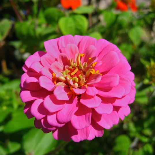 simply-pink_8446023170_o.jpg