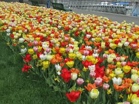 Gardens of Geneva