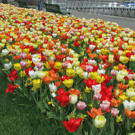gardens-of-geneva_8723518055_o.jpg