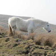 white-horse_9226104364_o.jpg