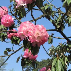 blossoms_8697095738_o.jpg