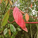 half-leaf_10872374176_o.jpg