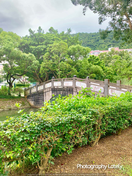 The Greenery of Chinese University of Hong Kong. Image Taken by Cometan.