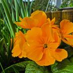 bright-orange_13900154843_o.jpg