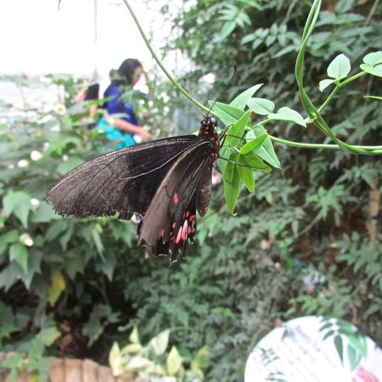 butterflies-are-great_9457478087_o.jpg