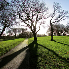 tree-shadows_12774238463_o.jpg