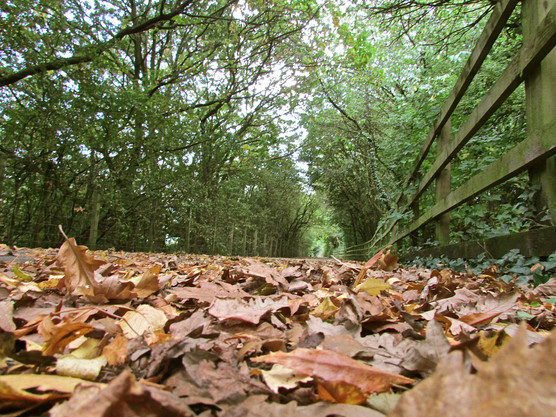 autumn-arch_10965857774_o.jpg
