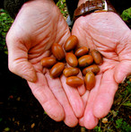 a-dozen-acorns_11010523676_o.jpg