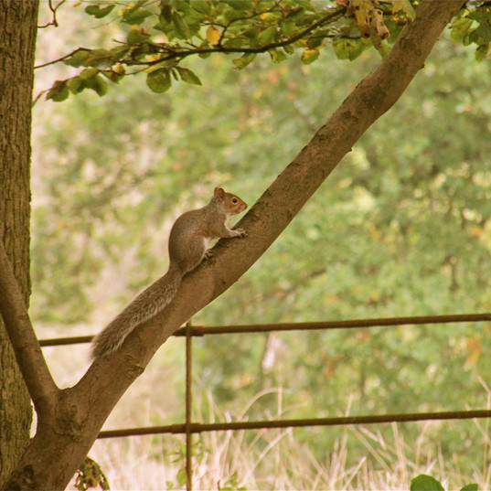 beauitfully-captured-squirrel_1108952237
