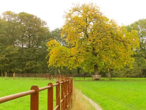 another-autumn-scene_11104795114_o.jpg