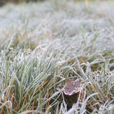 winters-first-frost_16538511261_o.jpg