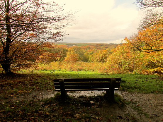 autumn-view_11051382813_o.jpg
