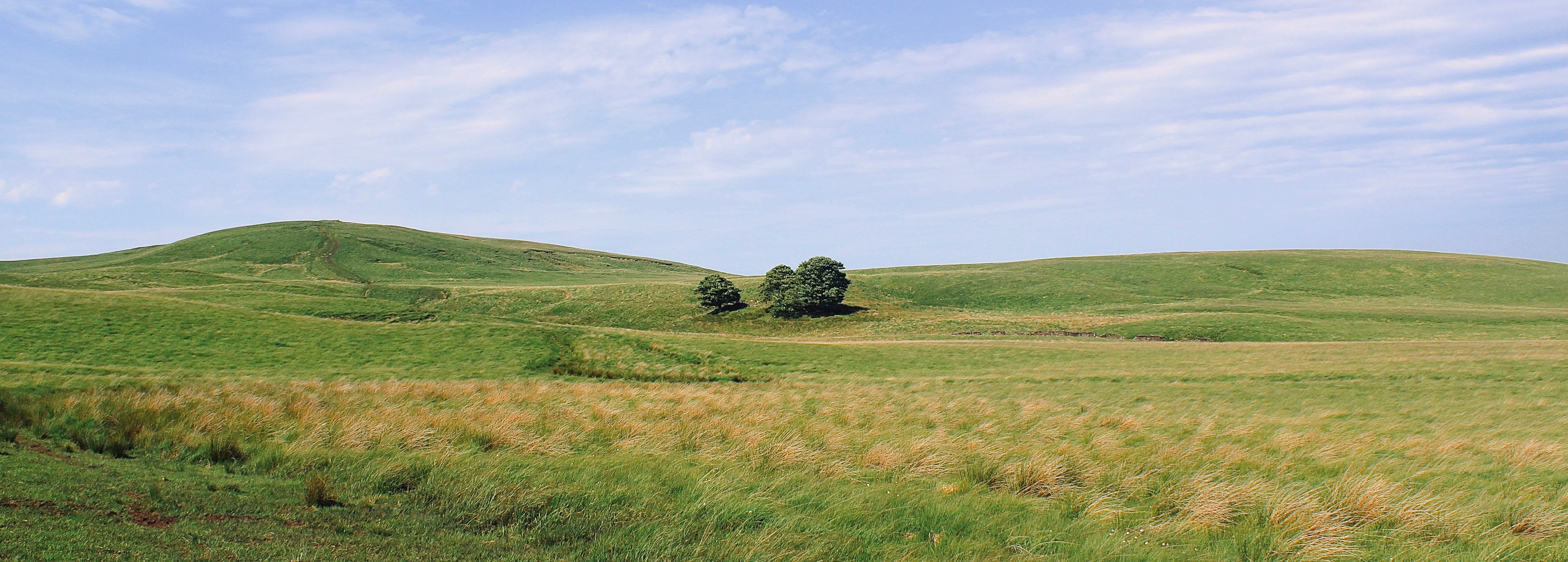 Lovely Lonely Trees on a Summer's Day