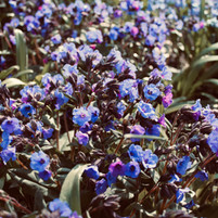 stunning-flowers_18646190910_o.jpg