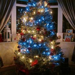 christmas-tree_11517853614_o.jpg