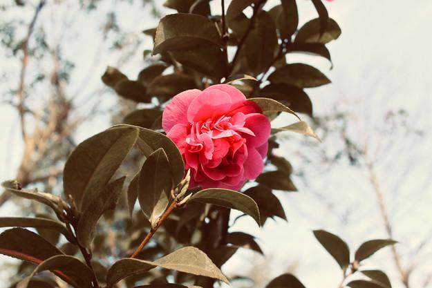 wonderful-flower_19227789675_o.jpg