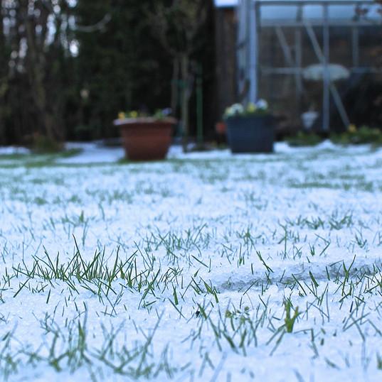 snowy-lawn_16485749180_o.jpg