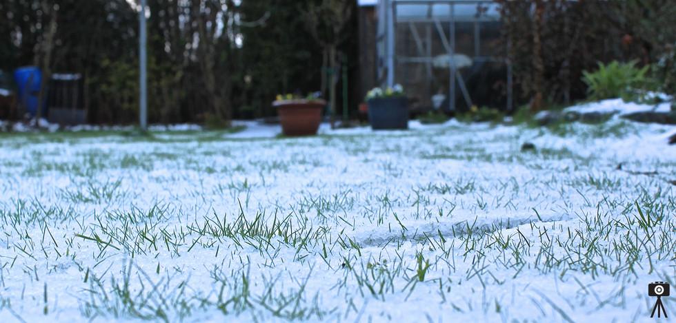 Snowy Lawn